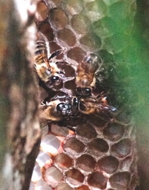Bees with hive
