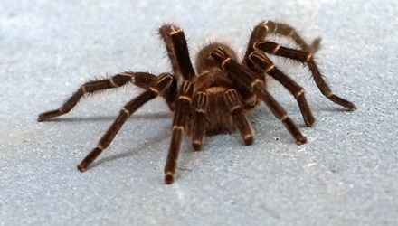 spider hairy close up